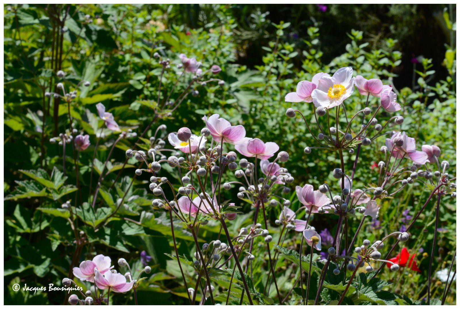 Saint-Valery-sur-Somme : les couleurs de l'Herbarium