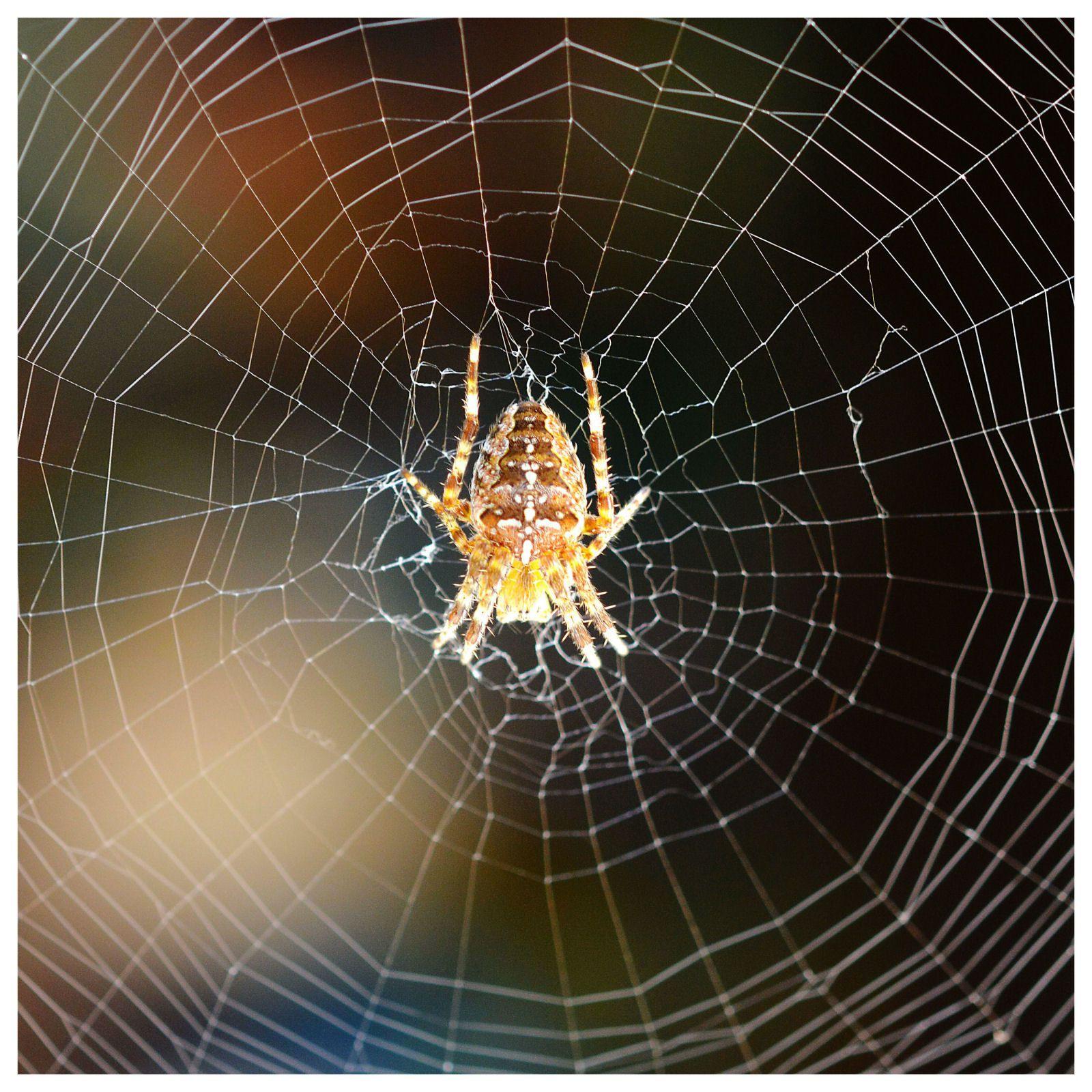 Ma petite copine araignée