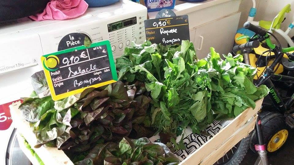 Anne productrice de légumes naturels, bios à st laurent de la salanque