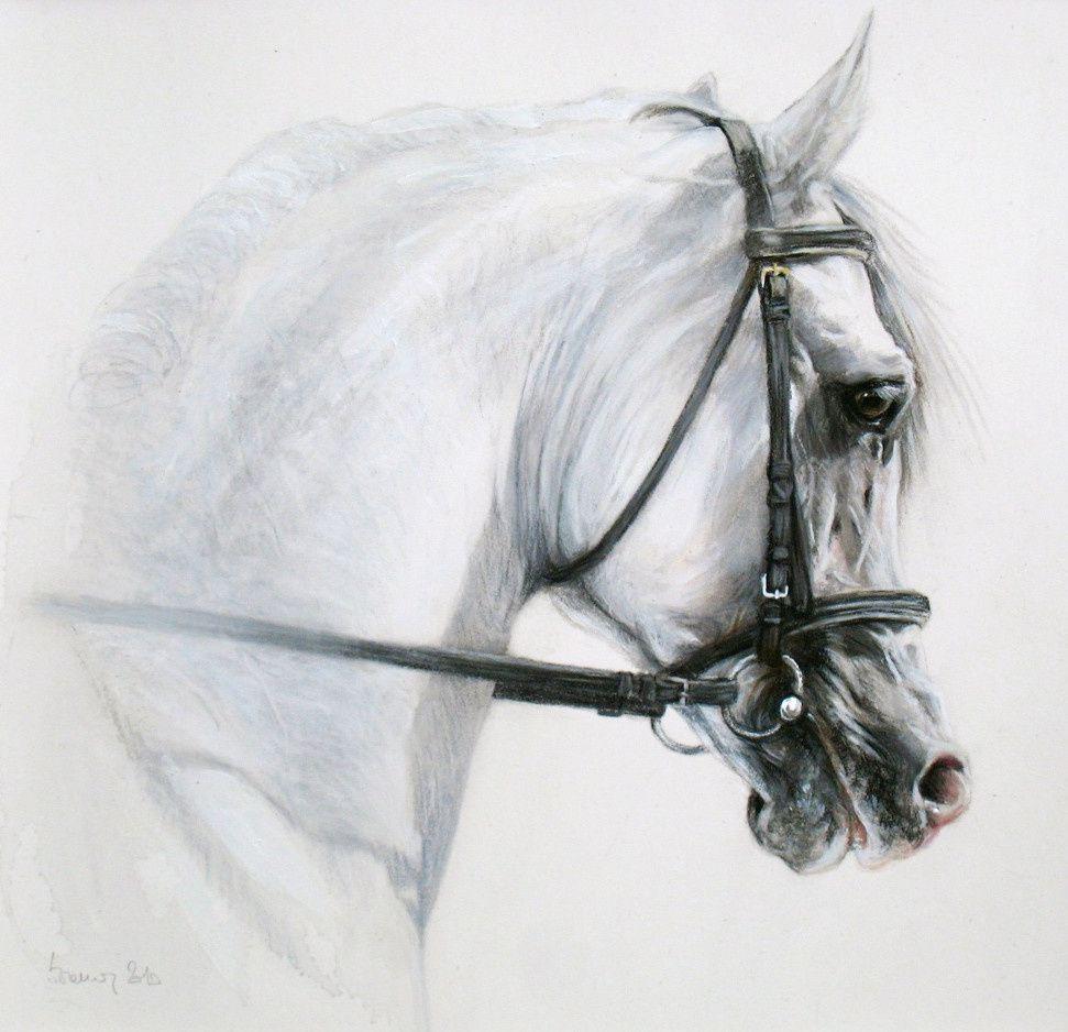"""""""Seuls les chevaux sont innocents"""" de Julie Wasselin"""