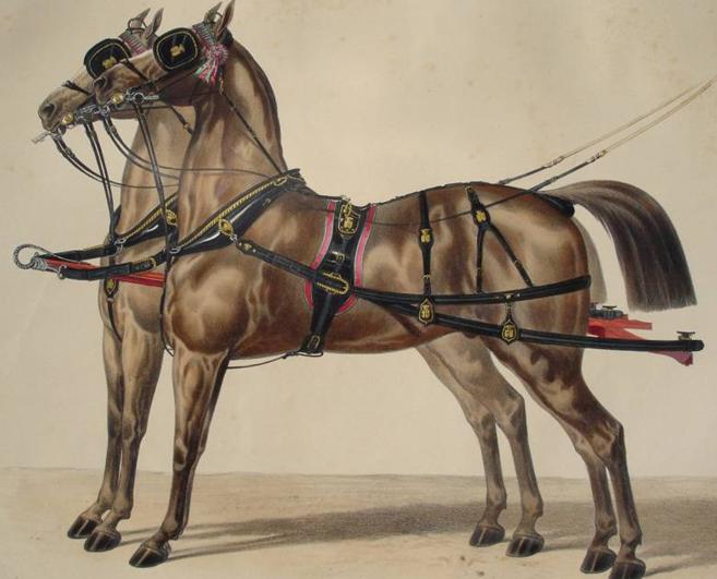 Harnais à deux chevaux