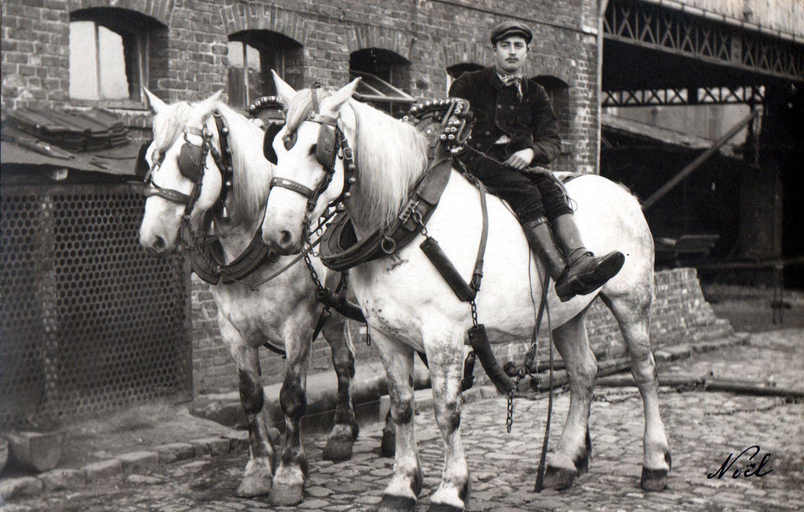 Dans sa déclinaison « trait », le Boulonnais était, au XIXème siècle, considéré comme LE cheval de roulage par excellence. Il n'acquit pourtant jamais la notoriété des Percherons, des Shires ou des Belges auprès de la clientèle étrangère.