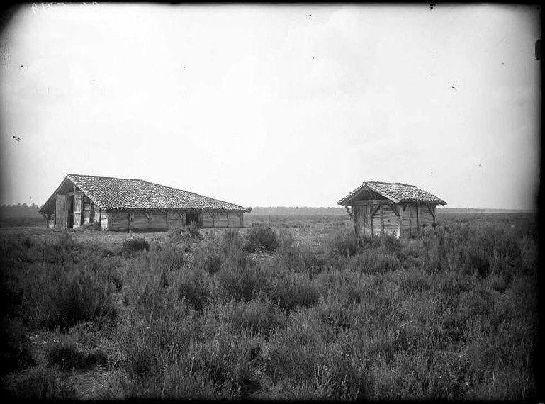 Les Landes d'autrefois, photographiées par Felix Arnaudin (Musée d'Aquitaine-source Joconde) /Cliquez sur les photos pour les agrandir/L