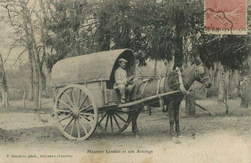 Colliers landais à tirant pour chevaux et voiture de meunier attelé avec un collier en bois landais