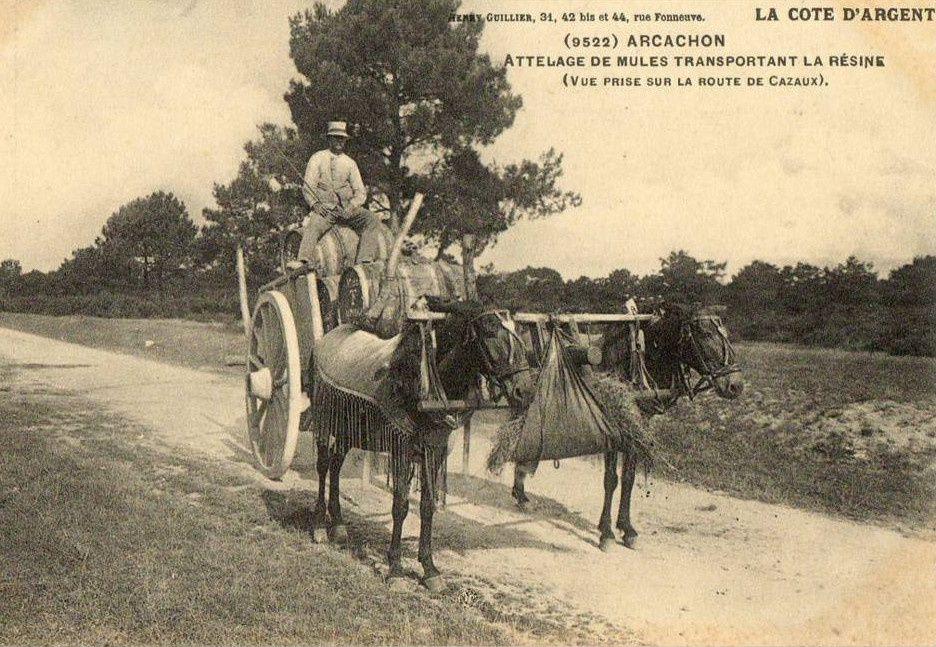 """La mule et l'attelage au joug landais;2° """"Le joug à collier landais"""""""