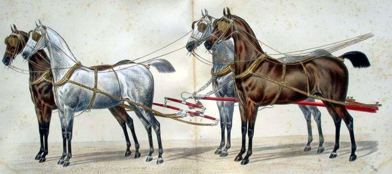 Harnais à quatre chevaux