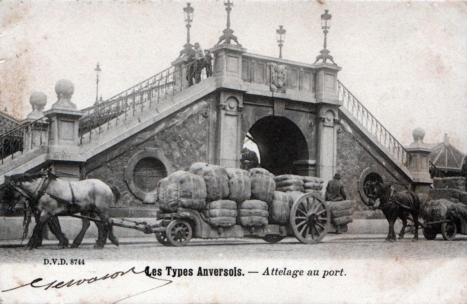 Chevaux de trait et voitures du port d'Anvers
