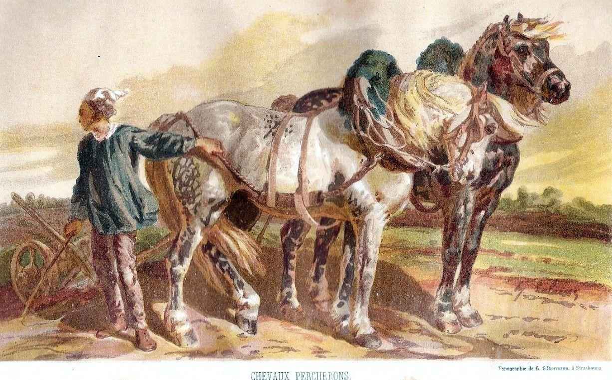 """Attelage de percherons extrait du journal d'agriculture pratique de 1861: """"Maison rustique"""""""