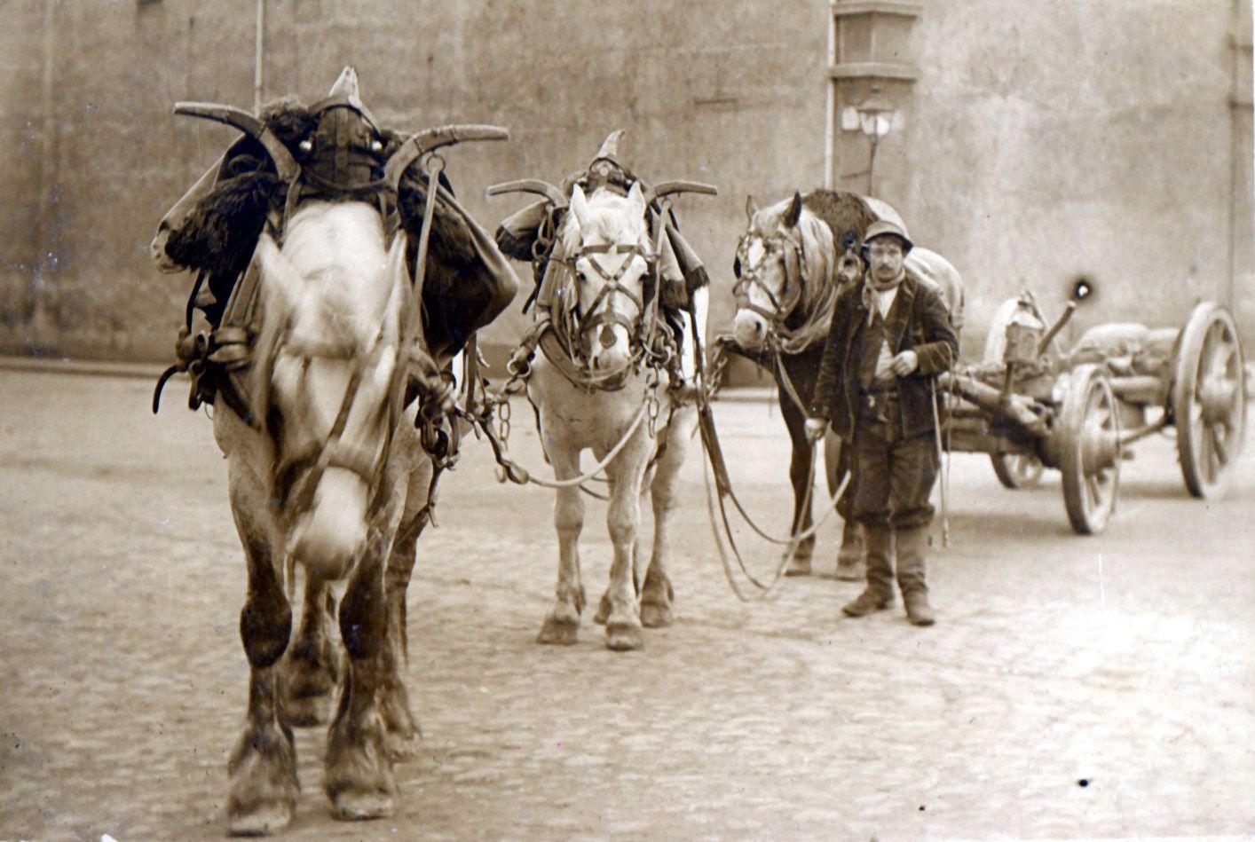 Portrait d'un roulier dans la Loire. Les chevaux de devant (devancier et chevillier) portent des colliers typiquement méridionaux tandis que le limonier porte un collier « à planches » couvert de sa housse. Une tradition qu'on retrouve du Dauphiné au Languedoc, et dans le Roussillon.