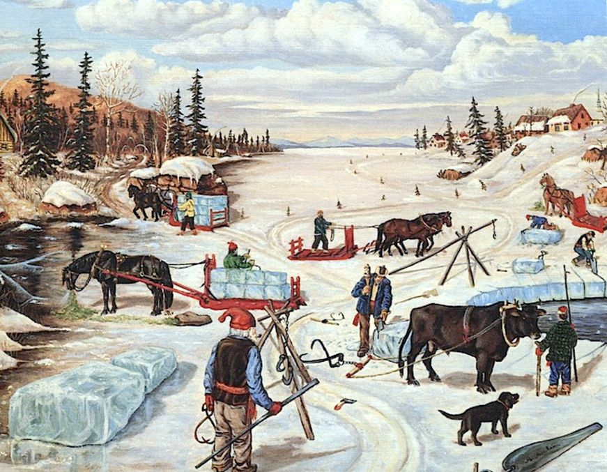 Le cheval dans l'exploitation de la glace