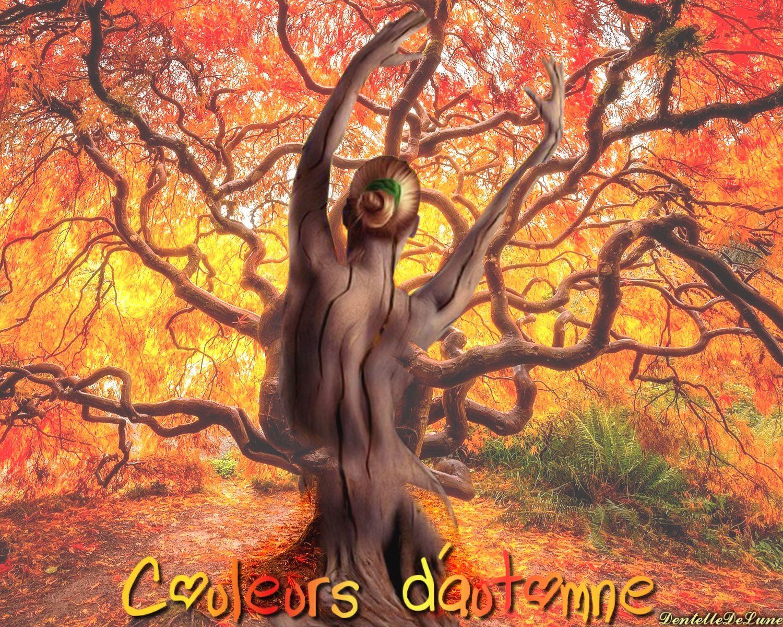image-couleurs-d'automne-arbre