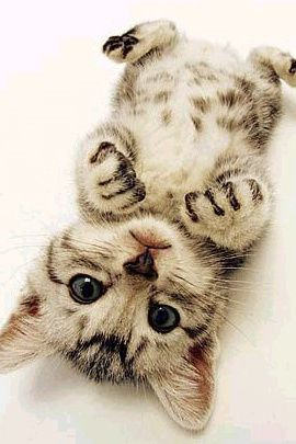 source : http://thedesigninspiration.com/articles/70-cutie-baby-animals-bring-your-a-good-mood/