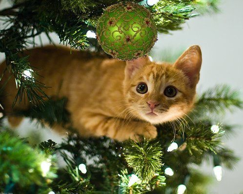 souce : http://amazows.com/gallery/kitten-in-christmas-tree.dsgn