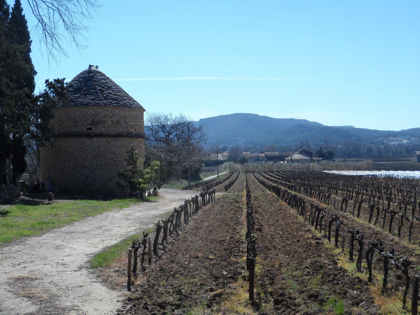 Un dernier tour au milieu des vignes, le week-end est terminé.