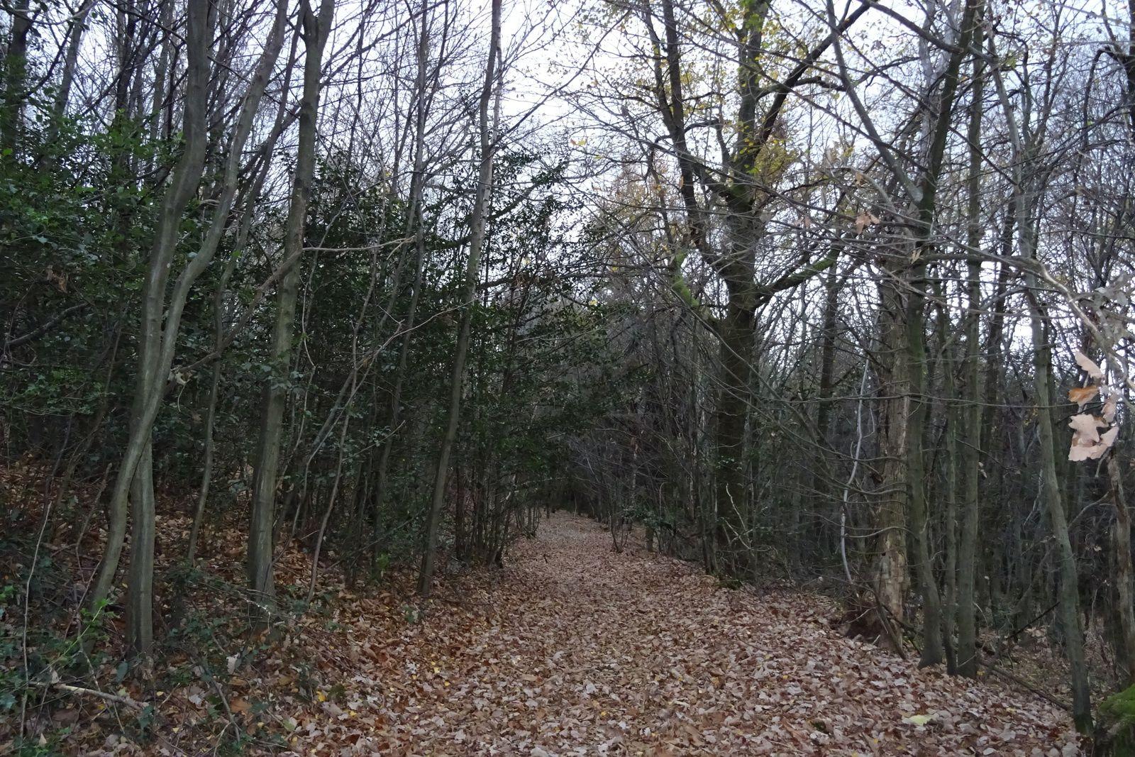 De Saint Héand je plonge sur la Fouillouse et les mêmes bois qu'hier, cette fois je fais le tour à l'envers.