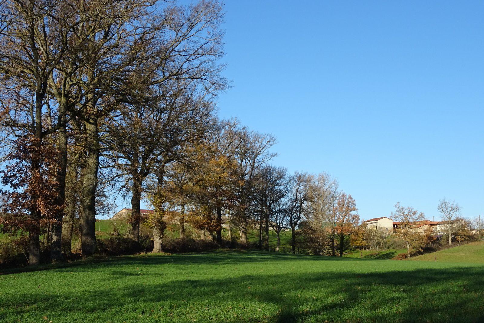 Les arbres n'ont pas tous perdus leurs feuilles, le ciel est bleu, l'herbe bien verte.