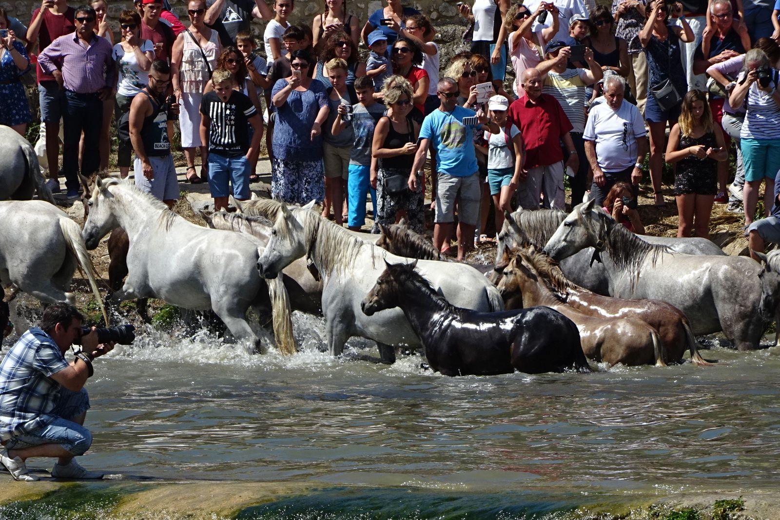 Les chevaux remontent sur la berge.