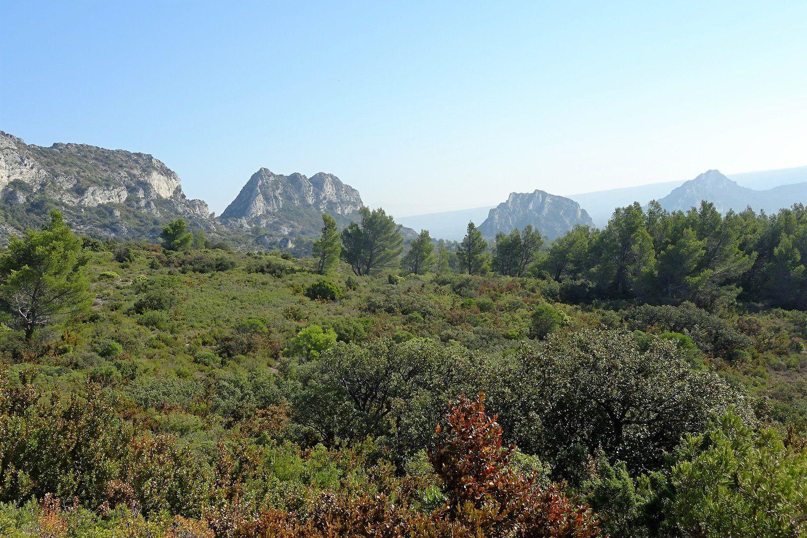 """Notre tour se fera dans les Alpilles, rien que le nom """"Alpilles"""" me fait rêver."""