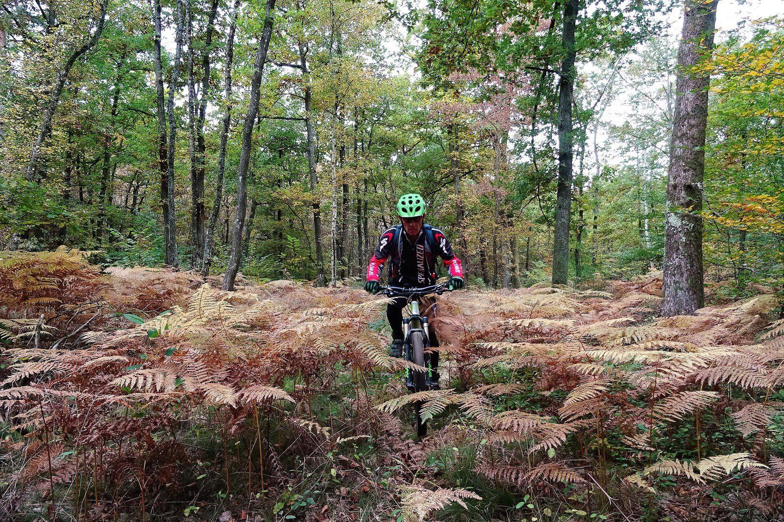 Sentier dans les bois de Meycillieux.