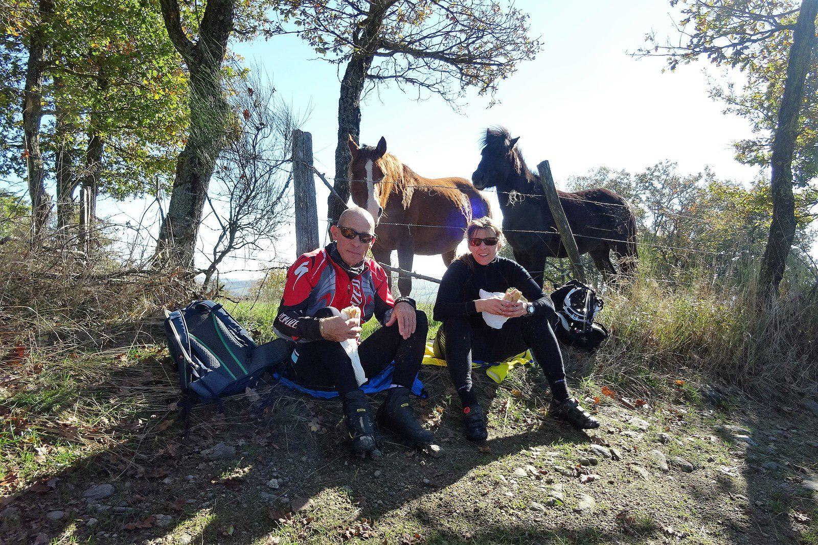 L'heure du casse-croûte a sonné, les chevaux sont curieux et s'approchent jusqu'à mettre le museau dans nos camels. Nous rentrons par les bois de Monichard.