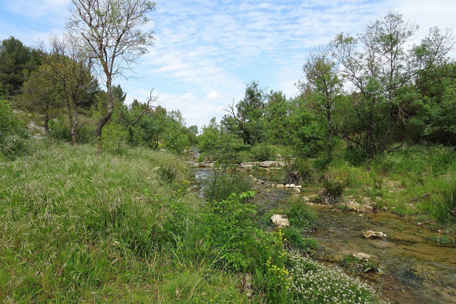 Paisible rivière dans laquelle se baignent des canards.