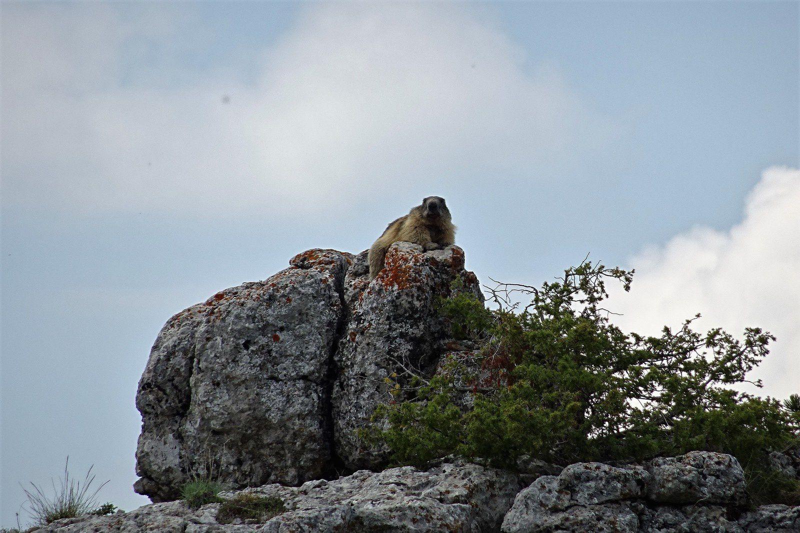 Nous verrons des marmottes, certaines courront devant nous avant de se terrer sous les pierres, superbe moment.