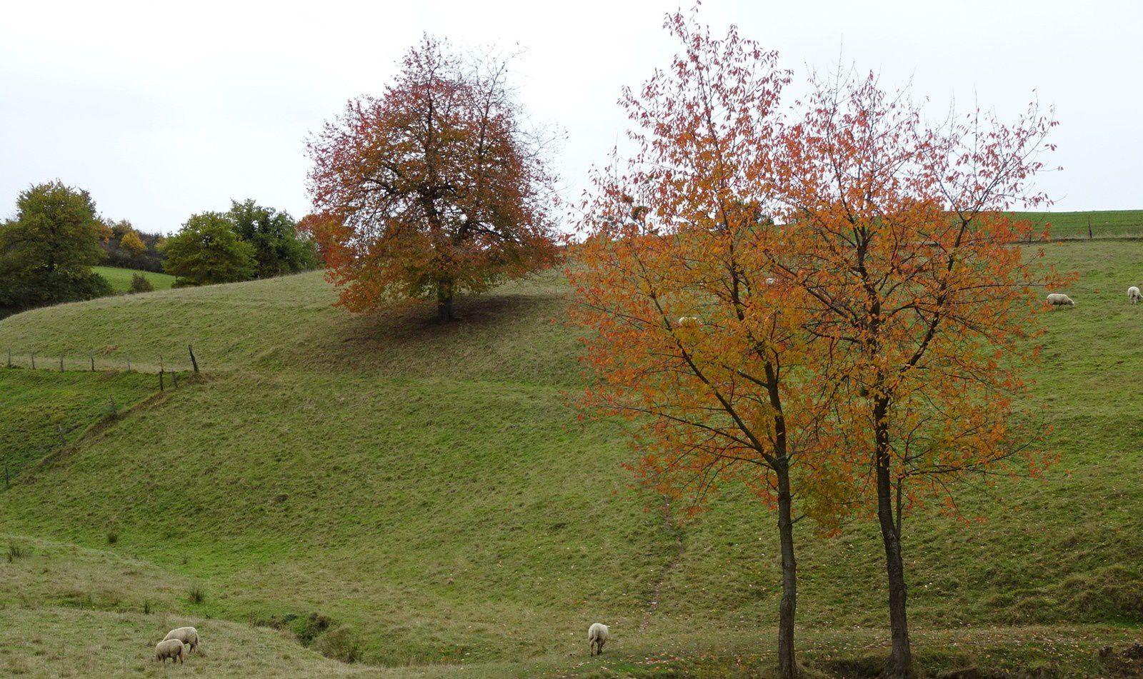 Les arbres ont encore de belles couleurs et je profite de prendre quelques photos avant l'arrivée de la pluie.