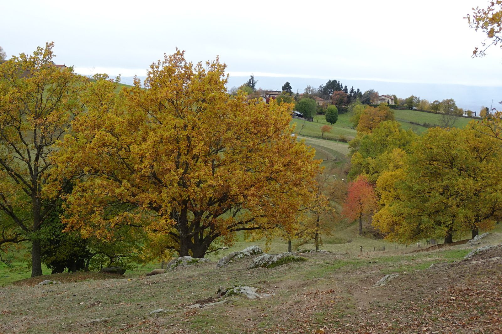 Je voulais pousser jusqu'à Fontanès mais je redescends par les bois de la Fouillouse et de François Premier, je me serai aérée et c'est l'essentiel.