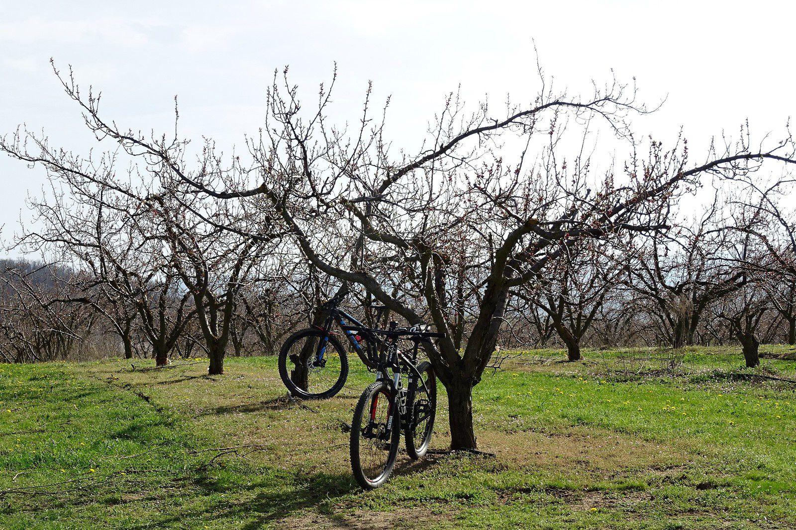 Nous sommes au ravitaillement, au beau milieu des arbres fruitiers.