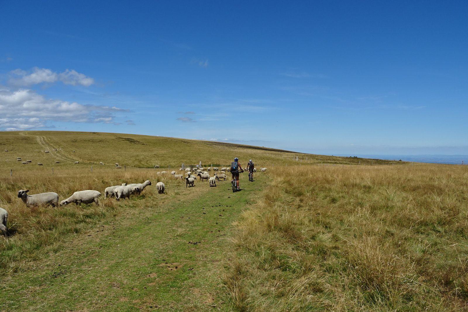 Les moutons remplacent les vaches de la dernière fois.