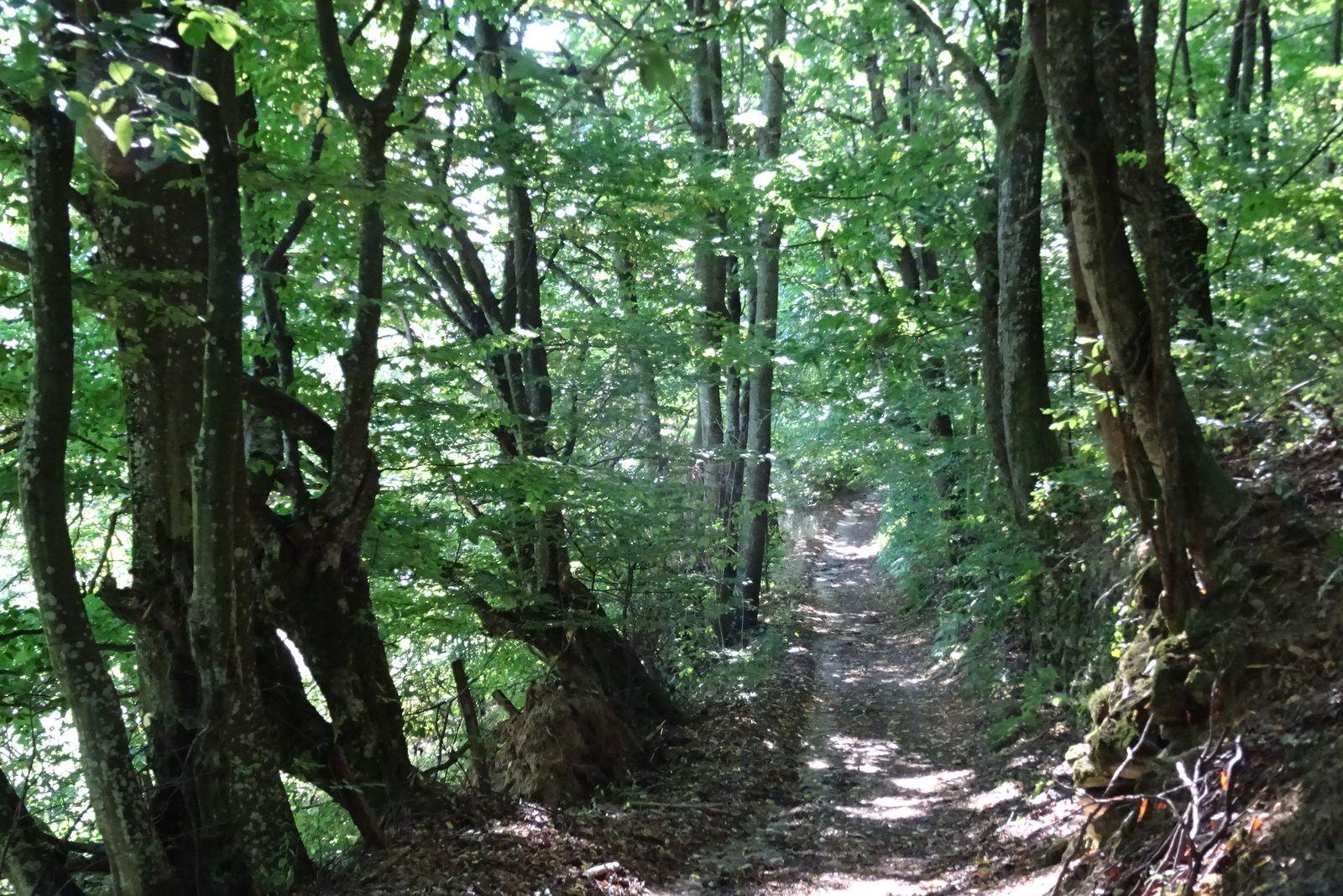 Les sentiers en sous-bois sont magnifiques, les orages en ont ruiné certains aussi bien à la descente qu'à la montée, il faut rester vigilant.