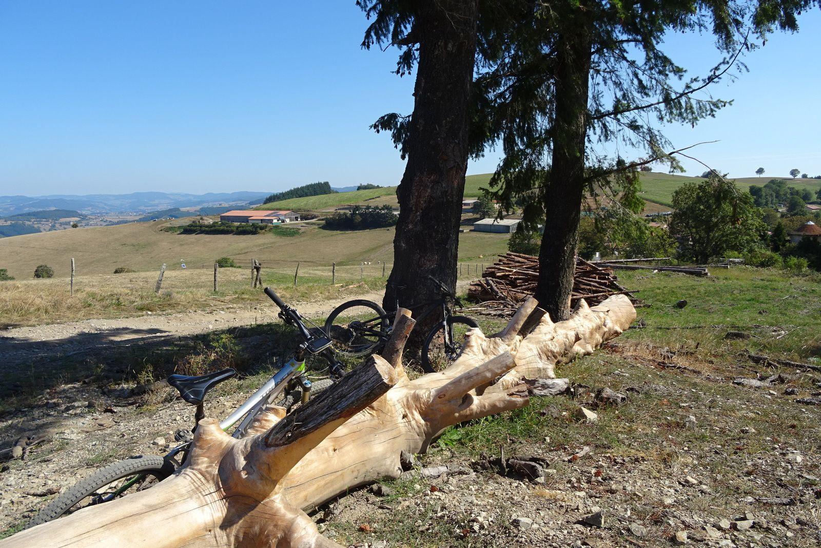 J'ai bien aimé cet arbre tout dépouillé de son écorce, son bois semble doré.