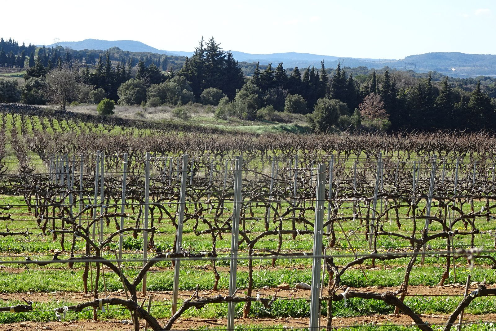 On ne va pas dans le Gard ou la Drôme sans passer par les vignes.