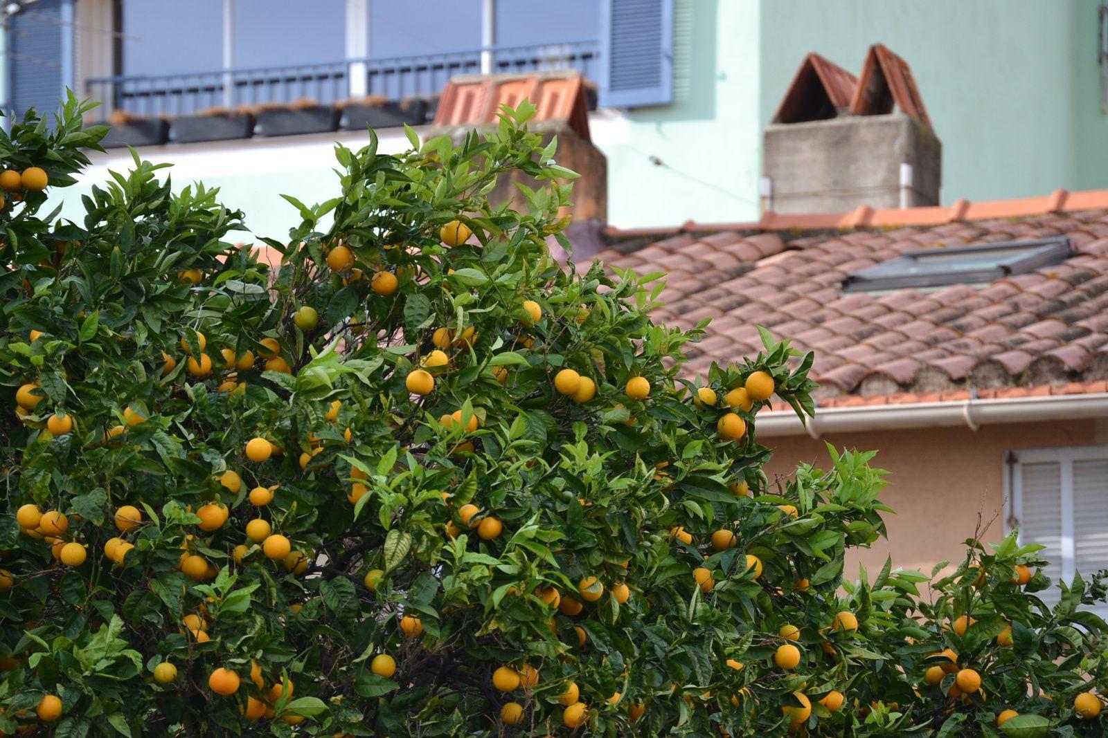 Ajaccio, son port, son figatellu, ses iles sanguinaires, son soleil (à un jour près) et son festival de BD...
