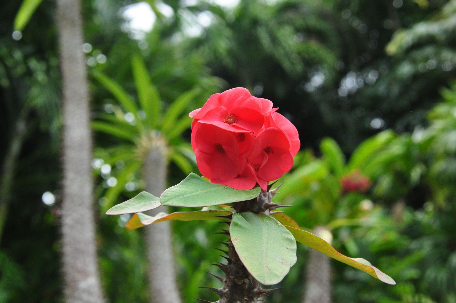 Le jardin botanique de Deshaies