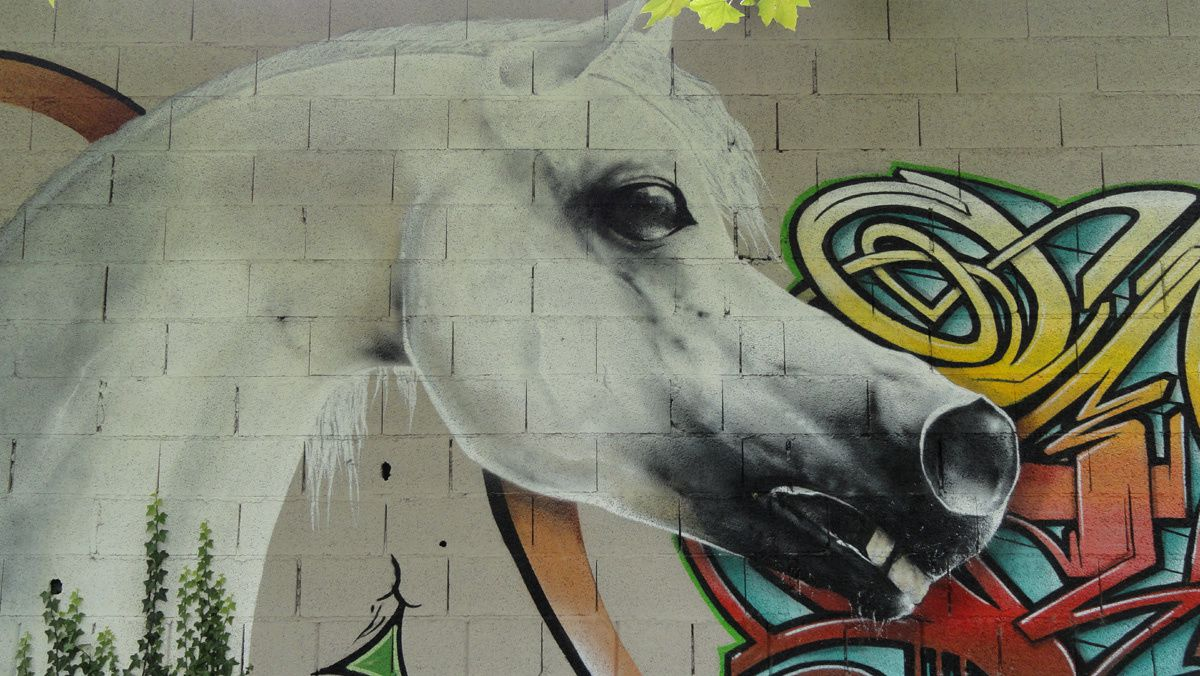 Street Art : Graffitis & Fresques Murales 65251 Laloubere