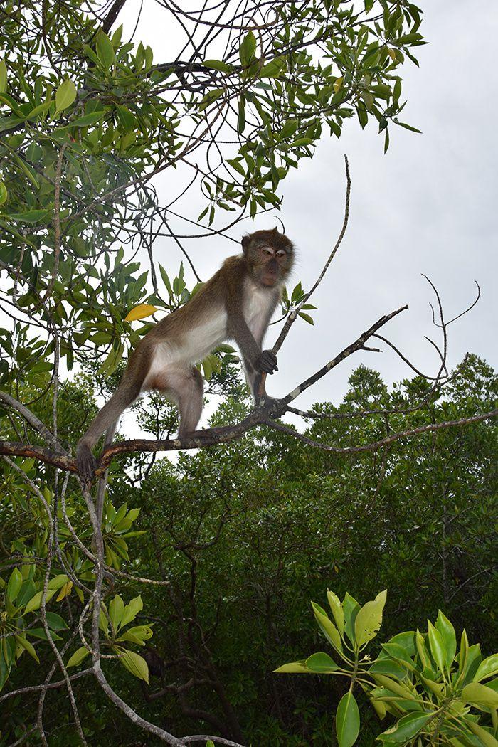 singes juchés sur les fils électriques