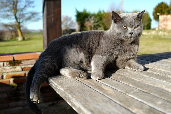 Douce Chatte