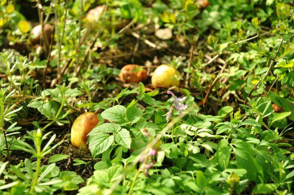 champignon chez gaillet saint paul en chablais