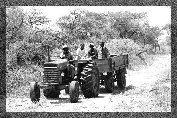 hommes noirs namibiens dans un tracteur