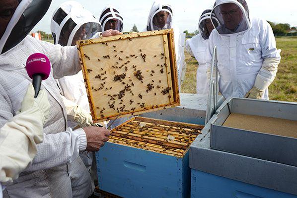 ruche miel biodiversite aeroport toulouse blagnac atb