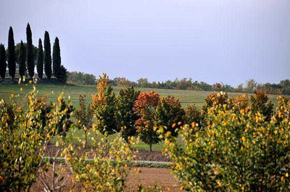 couleurs automne haute garonne © bernieshoot