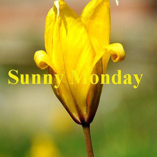 couverture sunny monday jaune