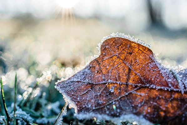 jardin hiver