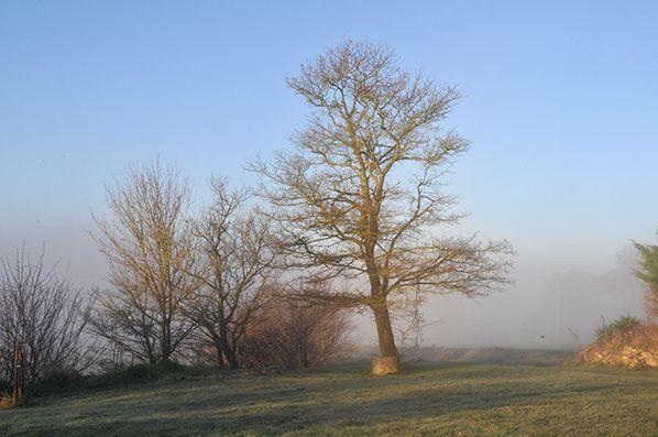 brouillard arbre campagne haute garonne
