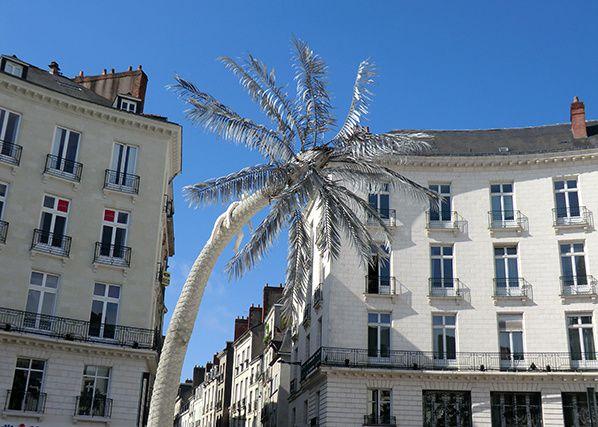 ciel bleu palmier nantes