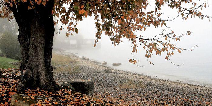 ... l'éther déliquescent, / Parmi les frondaisons murmure, feuille au vent ...