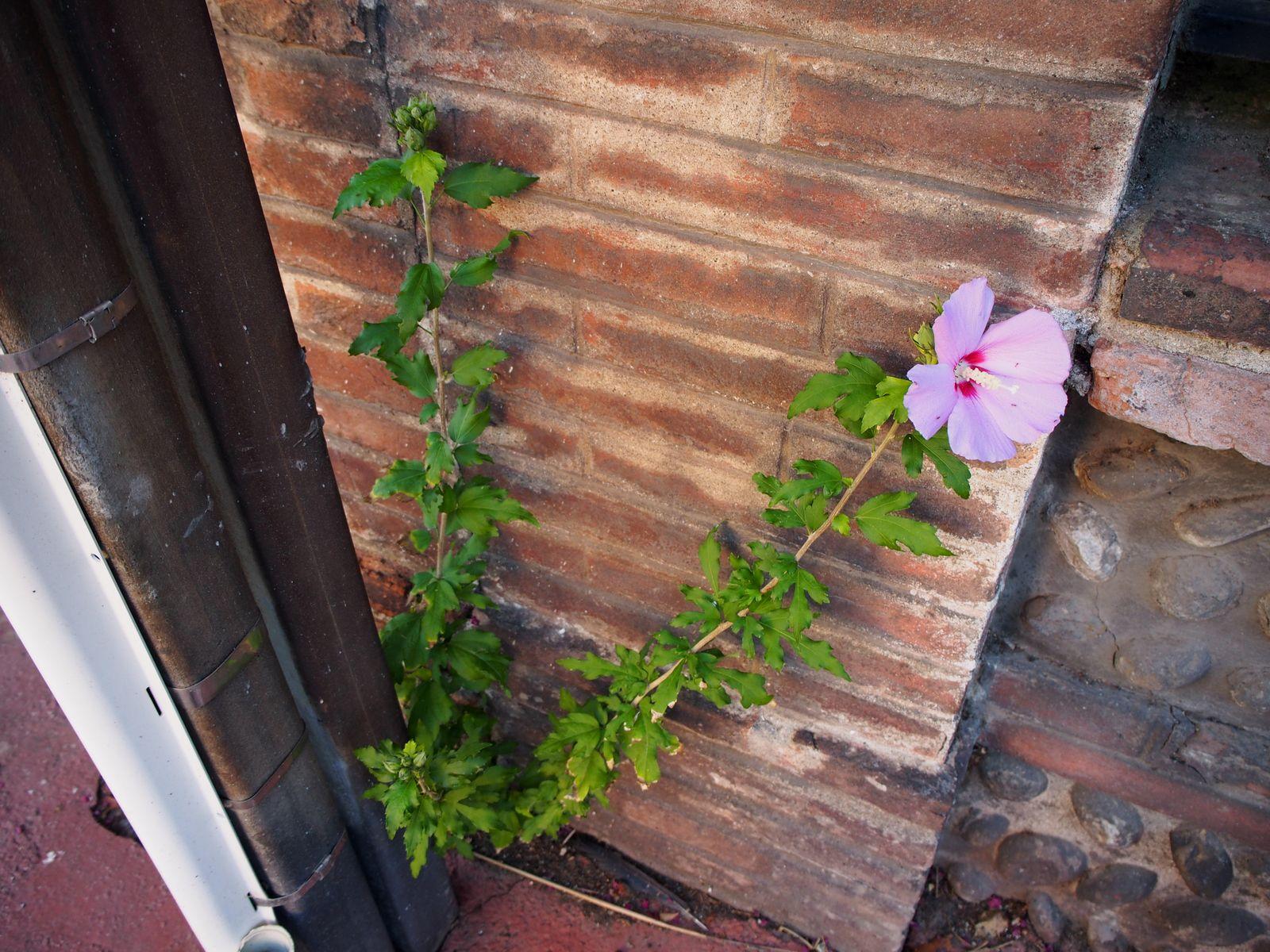 La flore sauvage du quartier du Busca