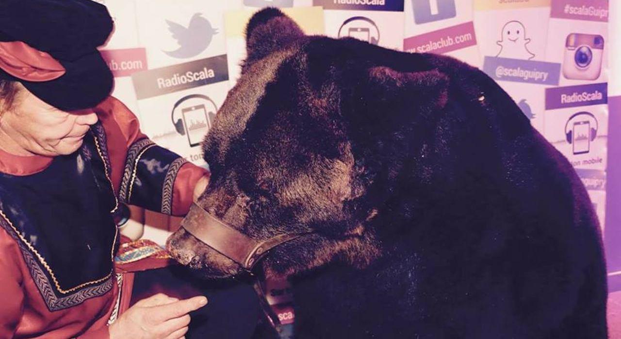 """Un ours exhibé lors d'une soirée cirque dans une discothèque : la Fondation Brigitte Bardot """"très choquée"""""""