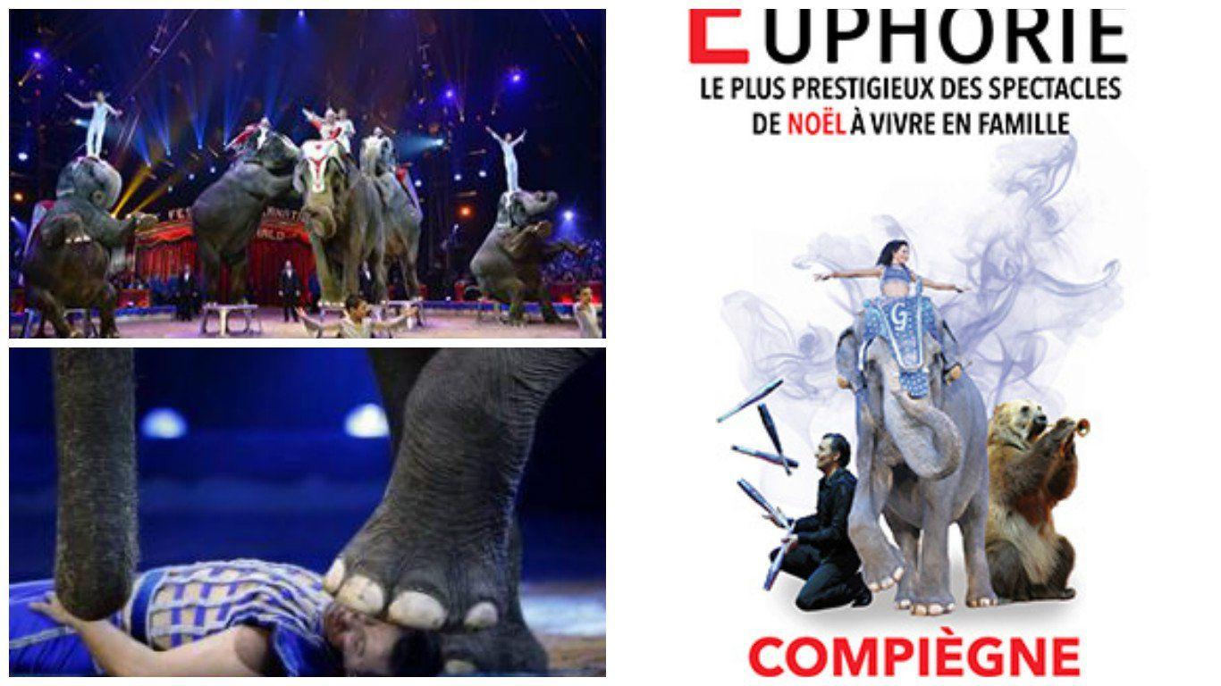 La Fondation Brigitte Bardot écrit au maire de Compiègne pour dénoncer la présence des animaux dans les cirques